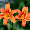 2 Flowers In Side By Side by Paul SEQUENCE Ferguson             sequence dot net