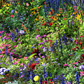 Flowers by Marc Bittan