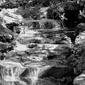 Flowing Water by Joyce Baldassarre