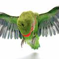 Flying Parrot  by Yedidya yos mizrachi