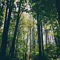 Forest by Alisa Suleymanova