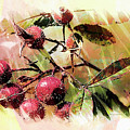 Fruit Of The Wild Rose by Margie Wildblood