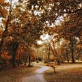 Golden Path by Jessica Jenney