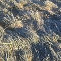Grass by Joseph Yarbrough