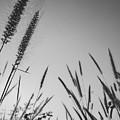 Grass by Tran Minh Quan