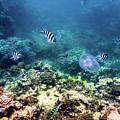 Great Barrier Reef by Walt Sterneman