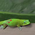 Green Gecko by Pamela Walton
