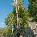Grupo Coba At The Coba Ruins  by Carol Ailles