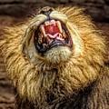 Hear Me Roar by Paulette Thomas