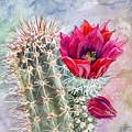 Hedgehog Cactus by Marilyn Smith