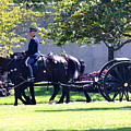 Horse And Caisson Team At Arlington Cemetery by William Rogers