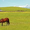 Horse Grazing by Robert Urwyler