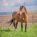Horse by Mariusz Talarek