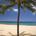 Hulopoe Beach, Palm Tree by Ron Dahlquist - Printscapes