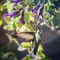 Hummingbird Heaven  by Saija Lehtonen
