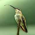 Hummingbird by Sandy Keeton