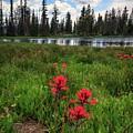 Ibantik Lake Trail by Gina Herbert