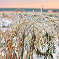 Ice On Branches by Sergey Nosov