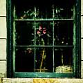 In The Window by Frances Ann Hattier