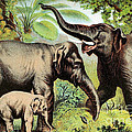 Indian Elephant, Endangered Species by Biodiversity Heritage Library