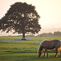 Irish Horse In The Gloaming by Carl Purcell