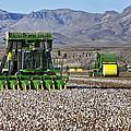 John Deere Cotton Pickers Harvesting by Inga Spence