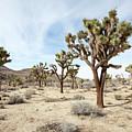 Joshua Tree National Park, California by Gal Eitan