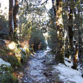 King Billy Forest Cradle Mountain by Sarah King