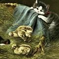 Kitten Peeking In On Chicks by MotionAge Designs