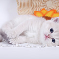 Kitten With Flover by Angela Savenko