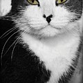 Kitty by Joyce Baldassarre