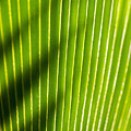 Leaf Close-up by Tomas del Amo - Printscapes