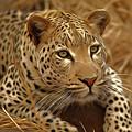 Leopard by Nadezhda Zhuravleva