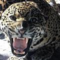 Leopard by Dorothy Binder