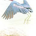Little Blue Heron In Flight by A Gurmankin