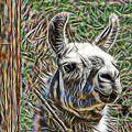 Llama by Marvin Blaine