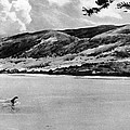 Loch Ness Monster, 1934 by Granger