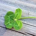 Lucky by Kristin Elmquist