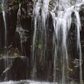 Maui Waterfall by Himani - Printscapes