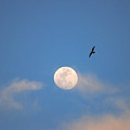 2- Moon Bird by Joseph Keane