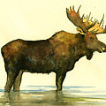 Moose Watercolor Painting. by Juan  Bosco