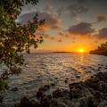 Morning At The Mangroves by Ronald Kotinsky