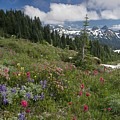 Mountain Meadow by Bob Gibbons