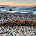 Cayucos State Beach Flotsam Pano by Patti Deters