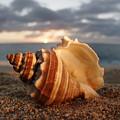 North Shore Seashell by Vince Cavataio - Printscapes