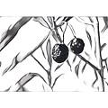 Olives by Melinda Sullivan Image and Design
