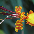 Orchid Expression 3892 by Alex Wencelblat