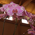 Orchid by Laurie Prentice