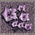 Paper Flowers by Iris Gelbart