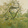 Peach Blossoms - Villiers-le-bel by Childe Hassam
